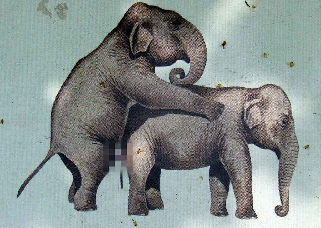 Parende olifanten